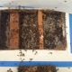 Bee Removal Cerritos CA | Drywall Bee Removal