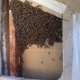 Bee Removal Laguna Hills CA | Stucco Wall Bee Removal