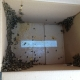 Cypress CA Bee Removal and Repair   Stucco Wall Bee Rescue