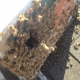 Long Beach Bee Removal | Roof Bee Rescue