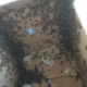 Roof Bee Removal and Relocation